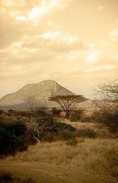 Acacia, Reserva Nacional de Samburu -   Acacia, Samburu National Reserve (August 2005)    www.vicentemendez.com