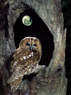 Where to put this pin? By the light of the moon or birds of a feather? Very cool pic.