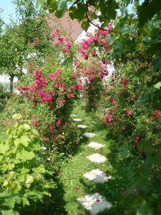 L'allée des roses