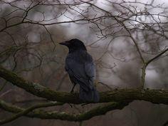 Crow, Hampstead Heath, London | Flickr - Photo Sharing!