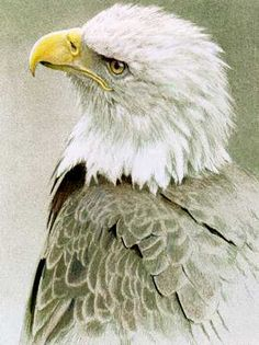 robert bateman - Google Search