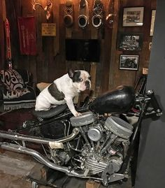 Motorcycle Shop, Motorcycle Garage, Harley Davidson Panhead, Old Motorcycles, Bobbers, Choppers, Bike Life, Custom Bikes, Motorbikes