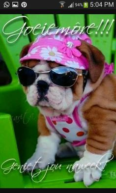 Pretty in pink. I Love Dogs, Puppy Love, Cute Dogs, Baby Animals, Cute Animals, Animal Babies, Silly Dogs, Bulldog Puppies, Pet Clothes