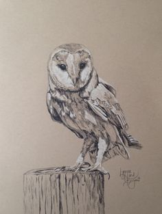 SOLD  Barn Owl for 08/25/2015  14 x 11 charcoal on tan toned Strathmore paper.  Available at $50 through www.lynnehurdbryant.com