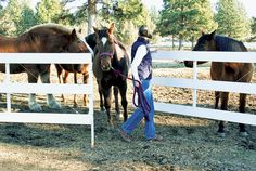 Get Your Horse Easily Out of Your Pasture