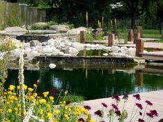 bassin de jardin décoré de rochers et plantes