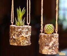 Olha só que ideia fofa para cultivar os cactos! O tronco oco perfurado resulta numa ótima casinha para as plantas.