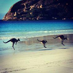 L'Australie, le pays des kangourous !