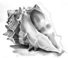 shell..woah I'd love to draw like this sometime. shells look ...