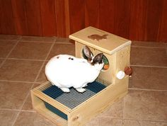 Hey, I found this really awesome Etsy listing at http://www.etsy.com/listing/121945360/bunny-rabbit-hay-feeder-with-built-in