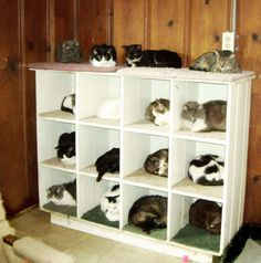 20 Brilliant Ways To Organize Your Cats