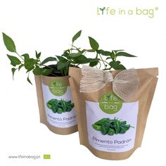 Grow bag pimento padron Life in a bag
