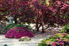 Blooming Zen garden   Mother-Daughter Press