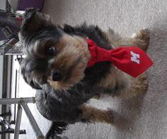 Daisy modeling the Baxter tie Bol