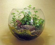 Бутылочные сады - Все о комнатных растениях на flowersweb.info