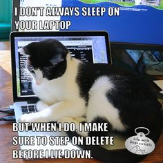 I Don't Always Sleep On Your Laptop but when I do, I make sure to step on Delete before I lie down. Calvin T. Katz Most Interesting Cat In The World