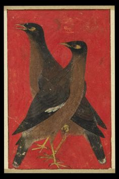 eyeburfi2:    Two myna birds, Mughal, North India, c. 1620. Via the Ashmolean