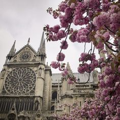 April in Paris...restaurant on left bank by Notre Dame