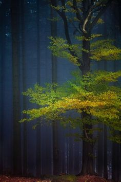 bright tree amongst forest at dusk.