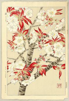 Cherry Blossoms II - wood block - by Shodo Kawarazaki, Japan Botanical Illustration, Botanical Prints, Japan Flower, Historia Natural, Art Japonais, Japanese Flowers, Korean Art, Japanese Painting, Japanese Prints