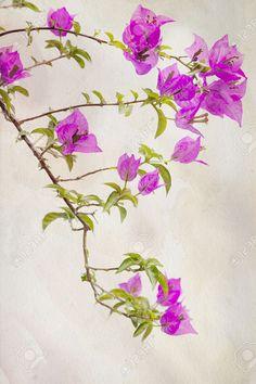 Bougainvilliers Roses Exotiques Sur Un Fond Millésime Banque D'Images, Photos, Illustrations Libre De Droits. Pic 30575802.