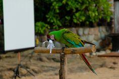#parrot Wedding Blog, Dream Wedding, Parrot, Adventure, Bodas, Parrots, Fairy Tales, Adventure Books, Adventure Nursery