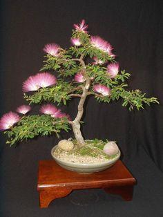 gartengestaltung bonsai baum garten pflanzen | unique plants, Best garten ideen