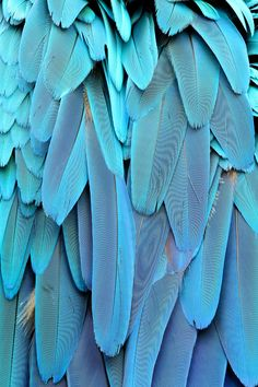 Stunning Blue Macaw Parrot Feathers Canvas #8 Quality A1 Picture Wall Art