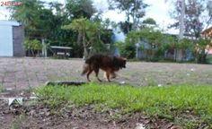 Cães idosos e com deficiência à espera de um lar