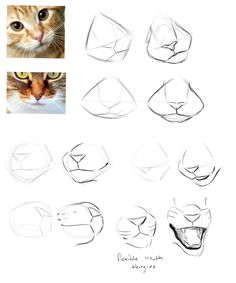 More muzzles by Finchwing #CatDibujo