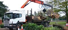 #Tree #Surgeons #Hampstead - Hampstead Tree Surgeons provide tree care services in Hampstead, Golders Green, Swiss Cottage, Kentish Town and surrounding areas.