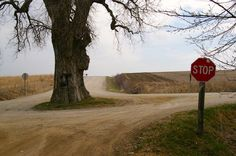 Tree in the Middle of the Road - Brayton, Iowa