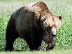 Bear Sanctuaries in Jammu and Kashmir, India @ Sanctuariesindia.com