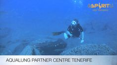 Diving with Stingray in Tenerife