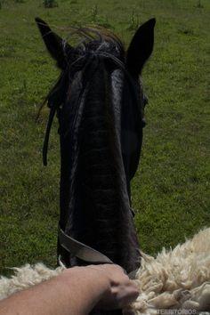 Montada na Morena, égua linda e famosa por ter aparecido em filmes internacionais. Até Katy Perry já andou nela