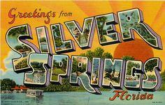 Silver Springs, Florida Postcard