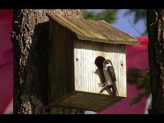 How To Make a Birdhouse Out of Wood - YouTube