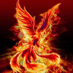♣ Sou um pássaro de fogo. Como fénix renasço das minhas cinzas, e me fortaleço a cada renascer. Um lindo, delicado e perigoso pássaro e apenas aqueles que não temem queimar-se, conseguirão conhecer os meus encantos e segredos. ♣  Thauane Santana.