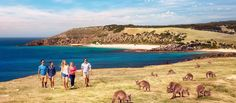 Image result for kangaroo island