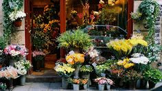 A Flor da Laranjeira: Floriculturas pelo Mundo