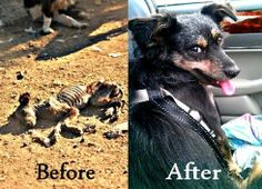 In recent weeks, the world has turned against authorities in Romania for their renewed push for the mass extermination of stray dogs in the country. Here is an amazing rescue story thanks to Romania's K-9 Angels group. Article. CLICK. --Posted to DESERT HEARTS Animal Compassion-- Phoenix, Arizona --- 10/11/2013 https://www.facebook.com/desertheartsphoenix