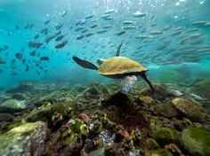 Image result for islands of galapagos