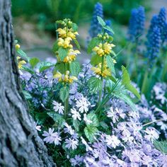 Keep your garden looking great by mixing it with longer-blooming plants, such as this yellow lamium: http://www.bhg.com/gardening/flowers/perennials/spring-planting-partners/?socsrc=bhgpin042114extendyourseasonofinterest&page=6