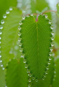 Dewdrops on a leaf