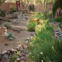Desert Gardening for Wildlife - Phoenix Home & Garden