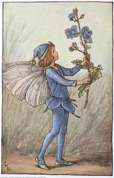 Illustration for the Speedwell Fairy from Flower Fairies of the Spring.  A boy fairy faces right, holding a speedwell flower.    Author / Illustrator  Cicely Mary Barker