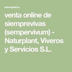 venta online de siemprevivas (sempervivum) - Naturplant, Viveros y Servicios S.L.