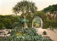 Tresco Abbey Gardens, Scilly Isles, Cornwall, England