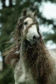 Beautiful Horse...........