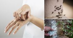 Conoce de qué manera puedes mantener alejados los insectos más molestos sin dañarlos a ellos ni a tu salud.